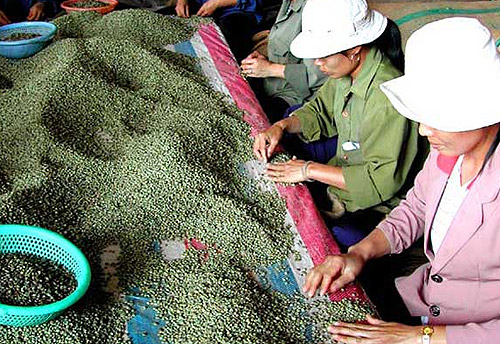 Café en Vietnam