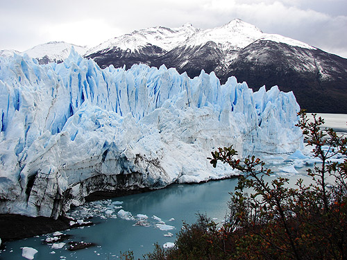 Calafate, Patagonia Argentina