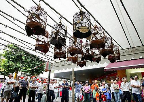 Concurso de canto de pájaros en Singapur