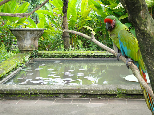 Parque de las Aves en Bali