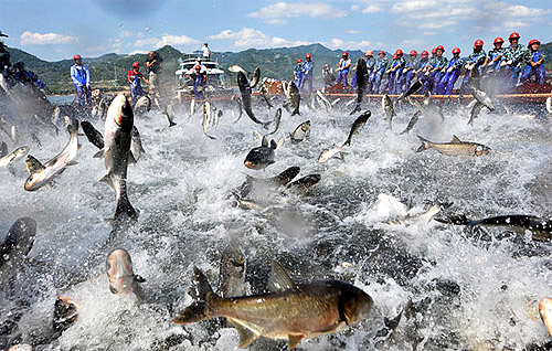 Pesca en el lago Qiandao