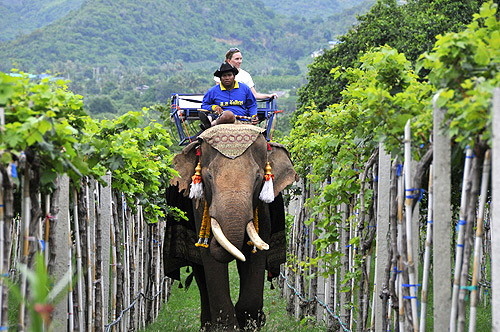Viñedos en Tailandia