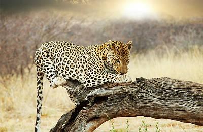 Ciudad del Cabo, Parque Kruger y Cataratas Victoria - Foto 1