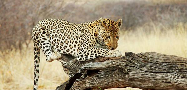 Ciudad del Cabo, Parque Kruger y Cataratas Victoria