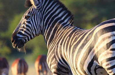 Ciudad del Cabo, Parque Kruger y Cataratas Victoria - Foto 6